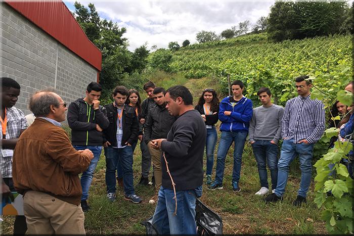700_diaaberto_viticultura