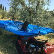 Olivespeed 1