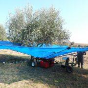 Olivespeed 2